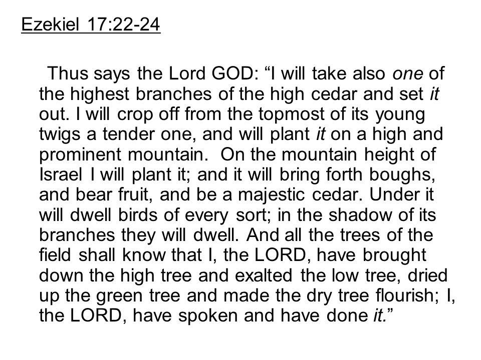 Ezekiel 17:22-24