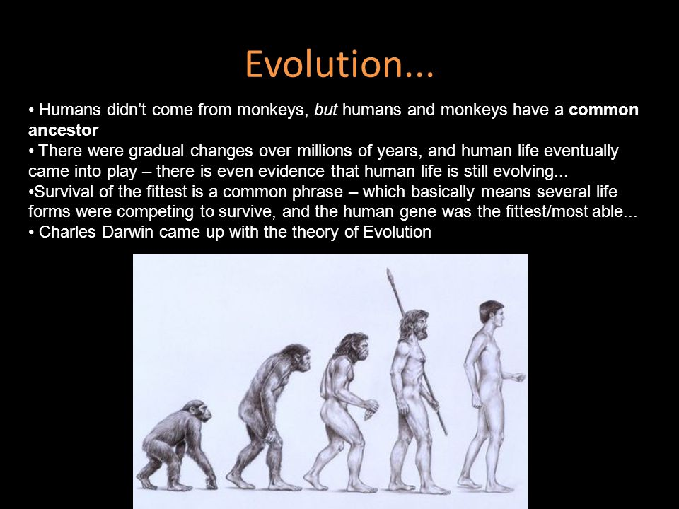 Evolution... Humans didn't come from monkeys, but humans and monkeys have a common ancestor.