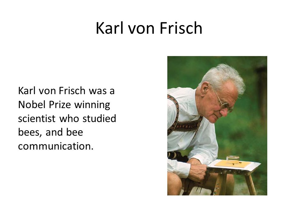 Karl von Frisch Karl von Frisch was a Nobel Prize winning scientist who studied bees, and bee communication.