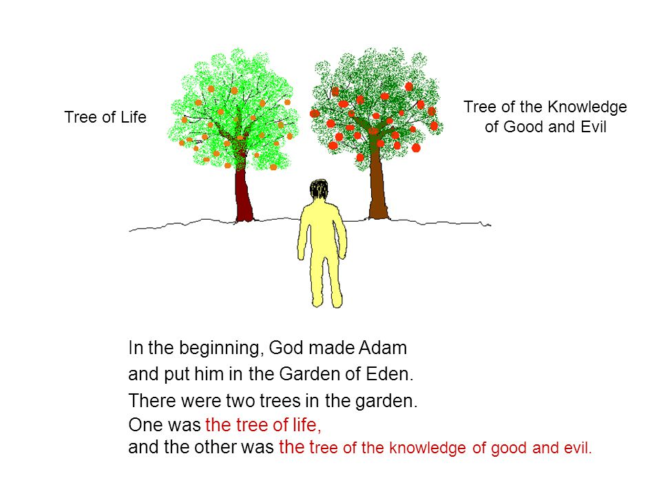 In the beginning, God made Adam and put him in the Garden of Eden.