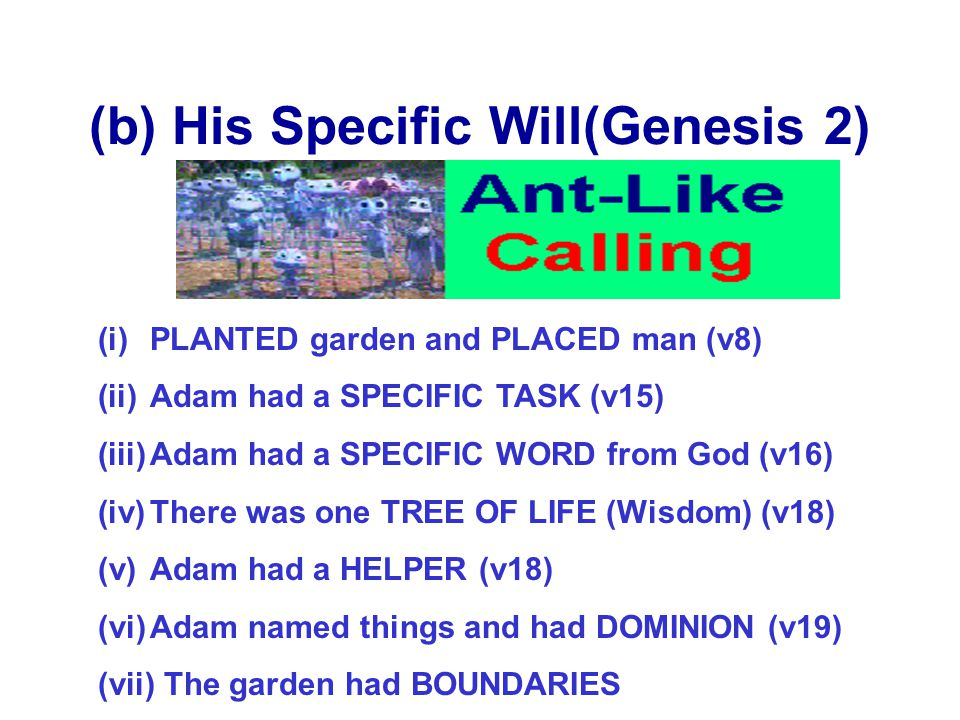 (b) His Specific Will(Genesis 2)