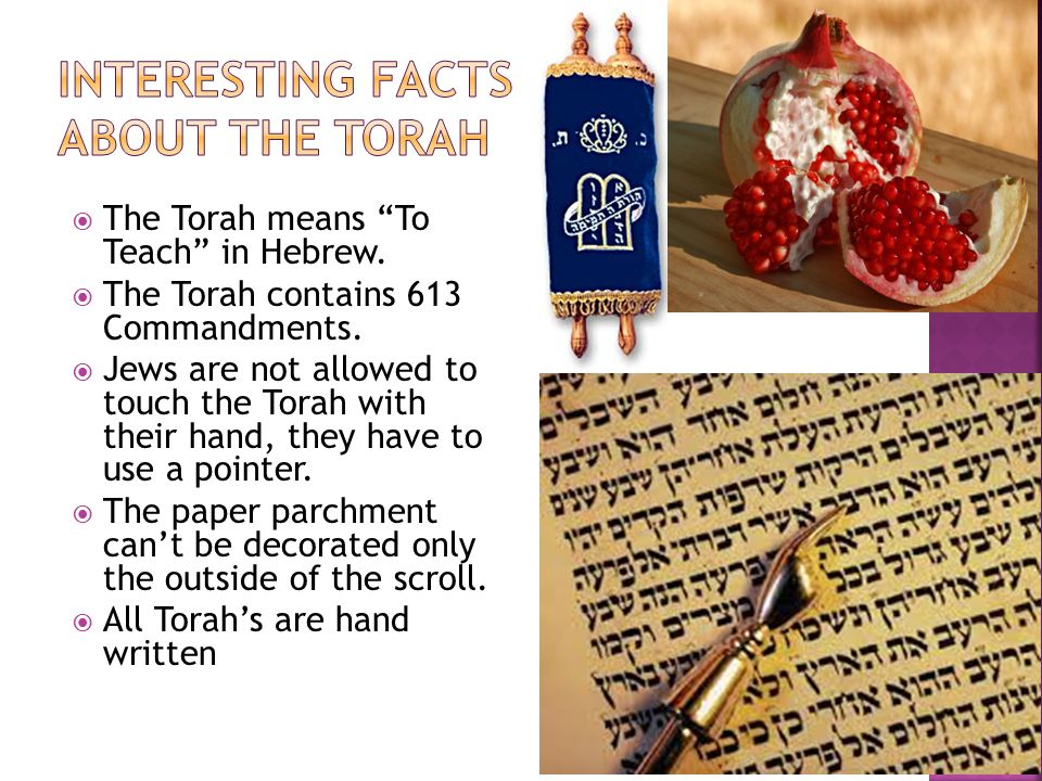 Interesting Facts about the Torah
