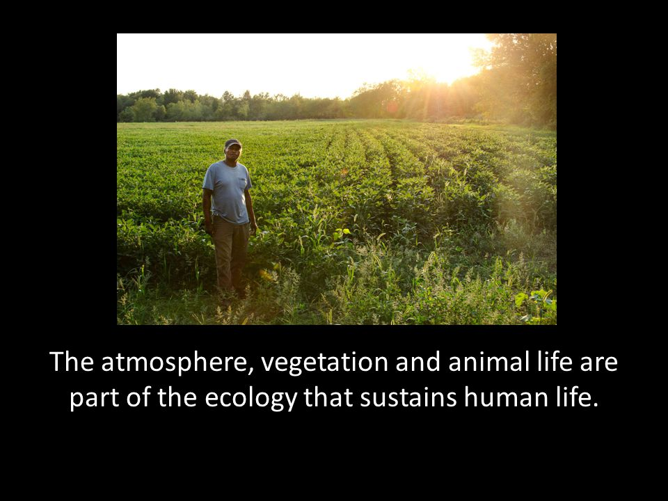 The atmosphere, vegetation and animal life are part of the ecology that sustains human life.