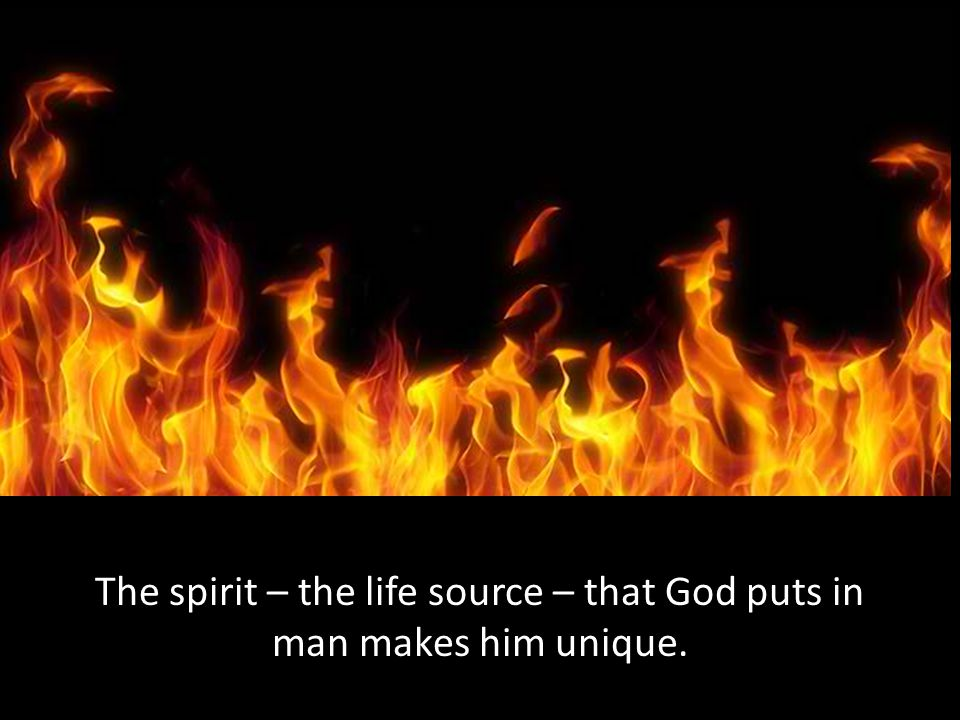 The spirit – the life source – that God puts in man makes him unique.
