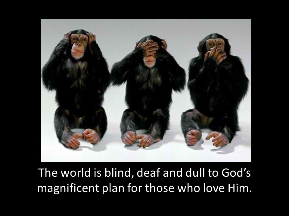 The world is blind, deaf and dull to God's magnificent plan for those who love Him.