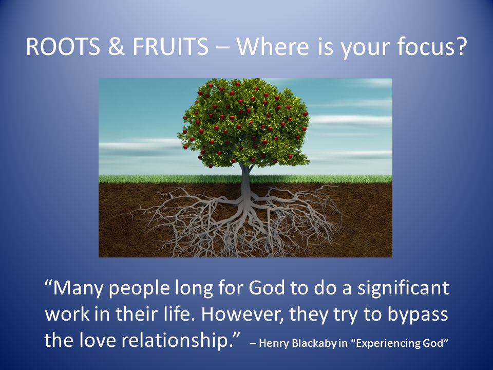 ROOTS & FRUITS – Where is your focus