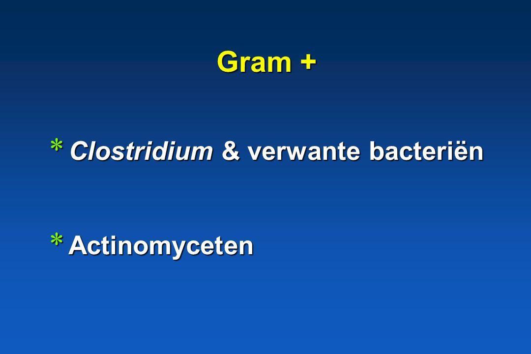 Gram + Clostridium & verwante bacteriën Actinomyceten