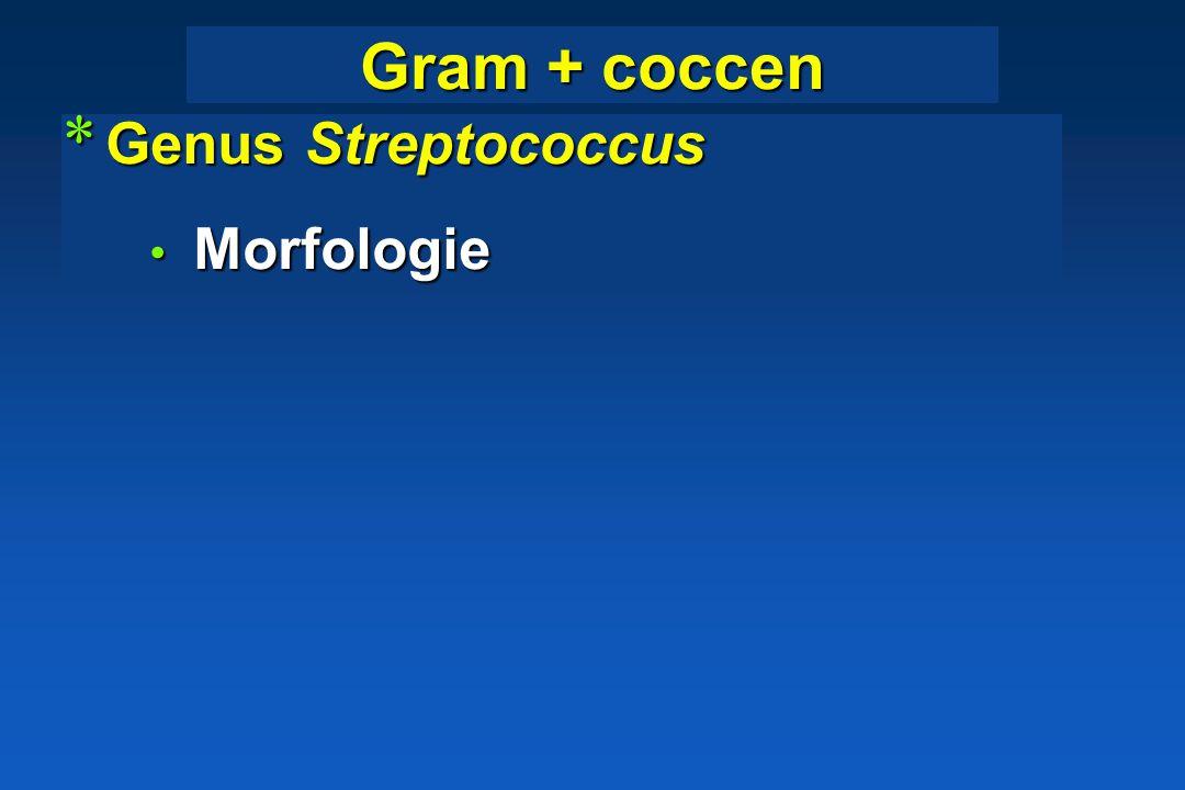 Gram + coccen Genus Streptococcus Morfologie