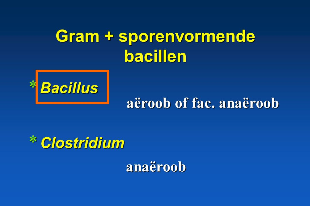 Gram + sporenvormende bacillen