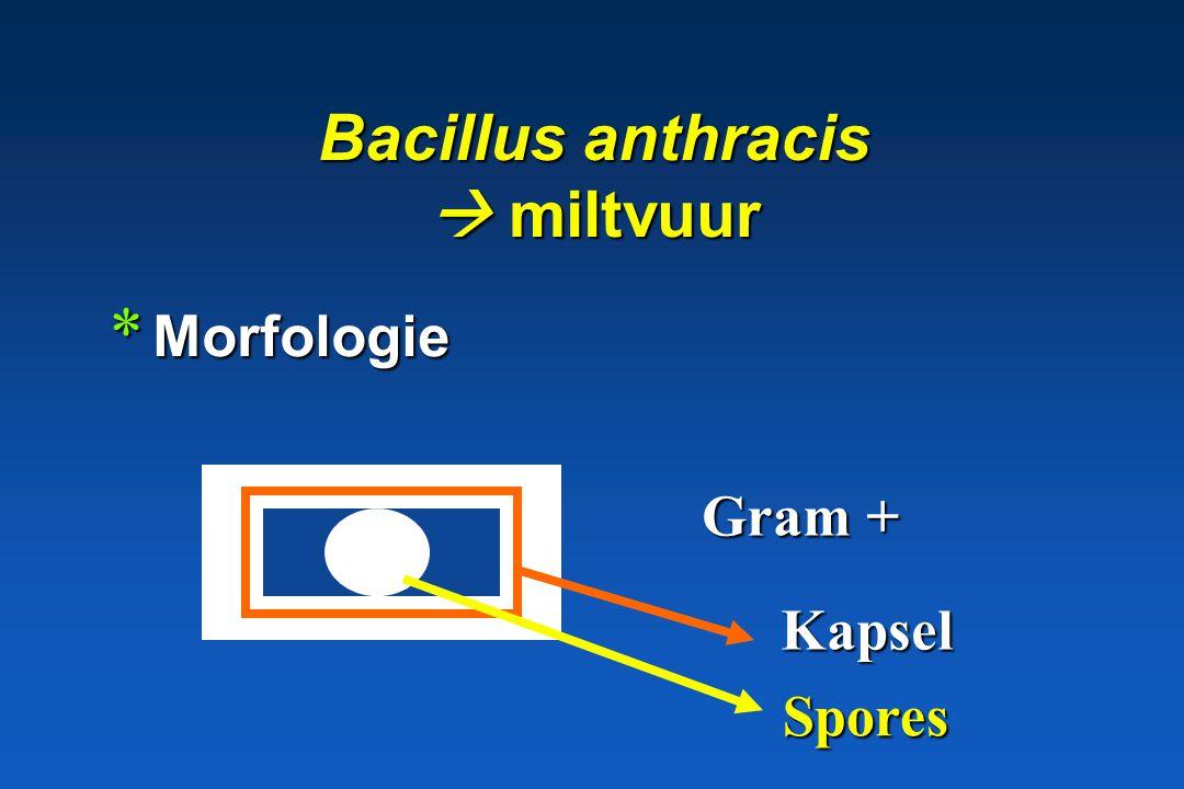 Bacillus anthracis  miltvuur