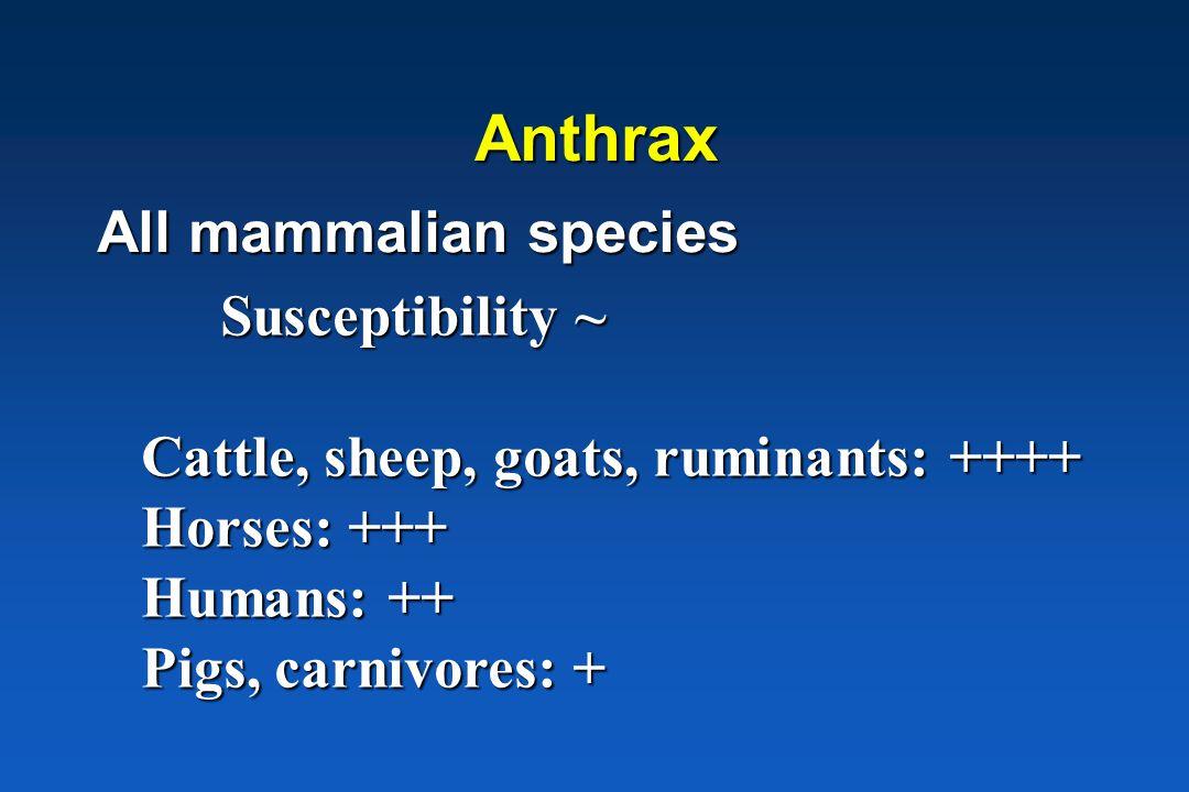 Anthrax All mammalian species Susceptibility ~