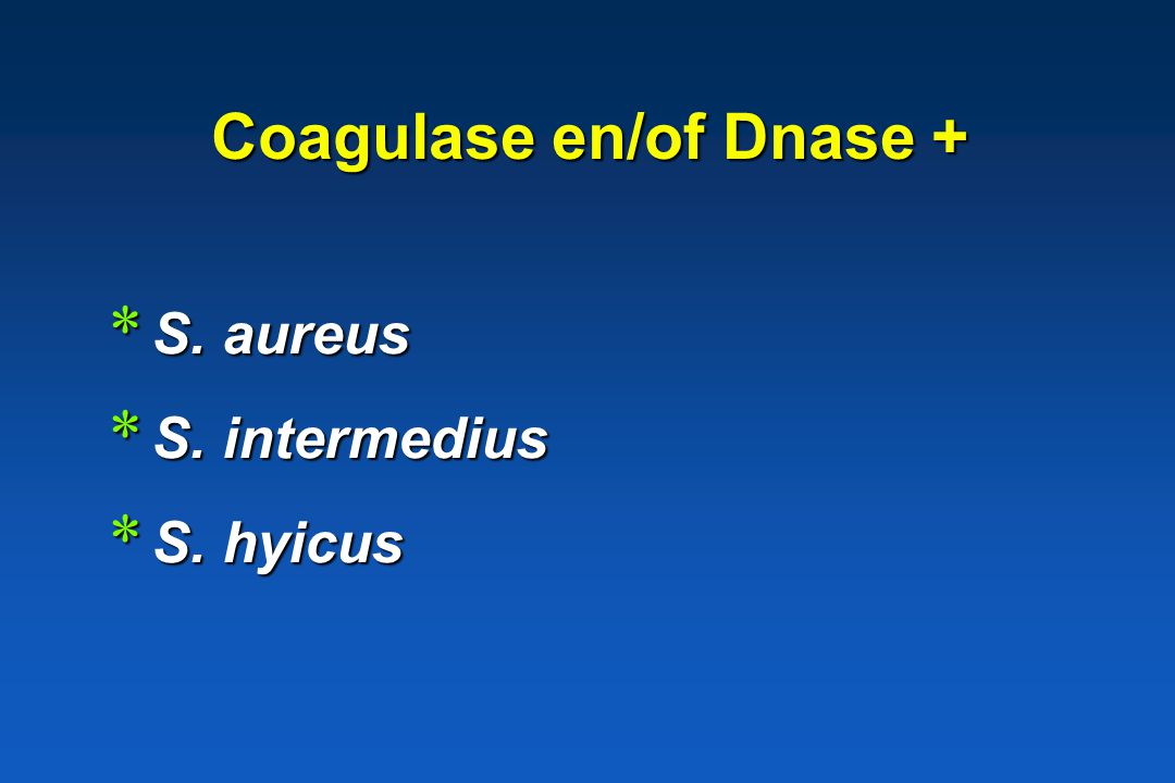 Coagulase en/of Dnase +
