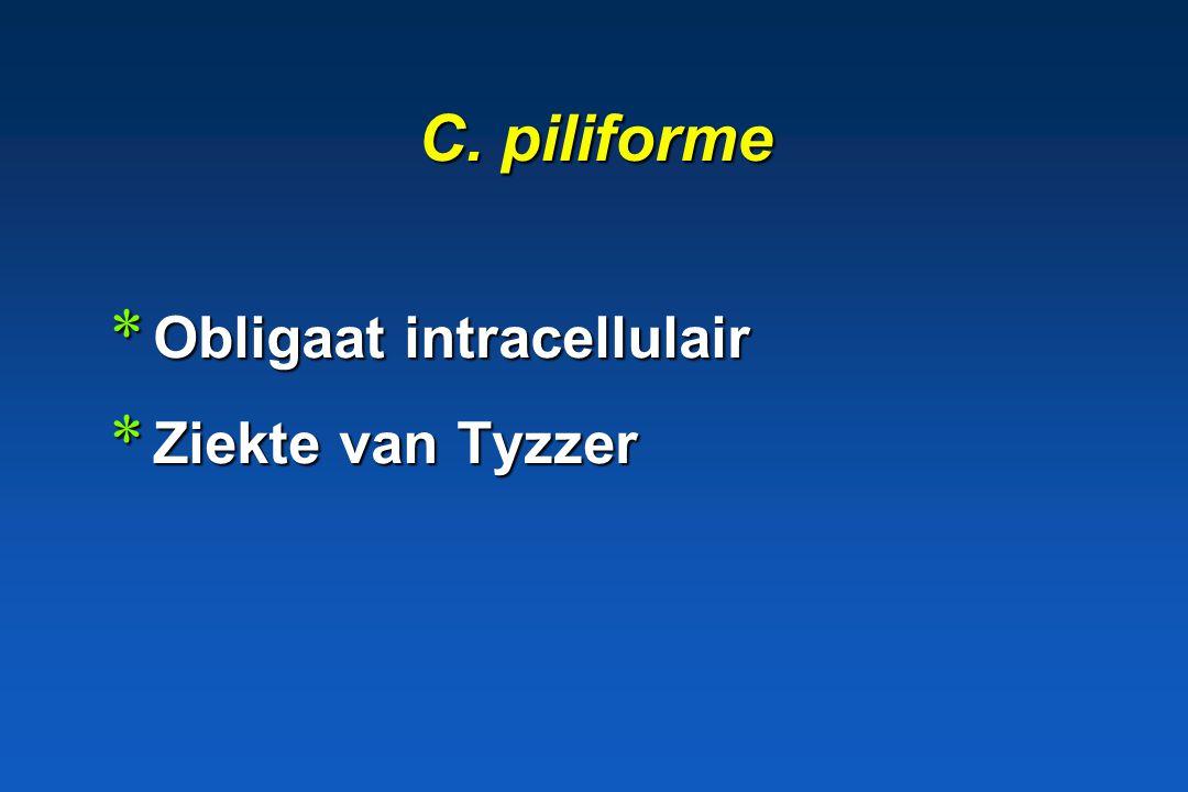 C. piliforme Obligaat intracellulair Ziekte van Tyzzer