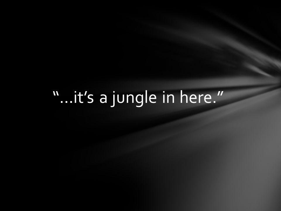 …it's a jungle in here.