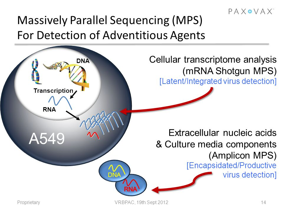 Massively Parallel Sequencing (MPS) For Detection of Adventitious Agents
