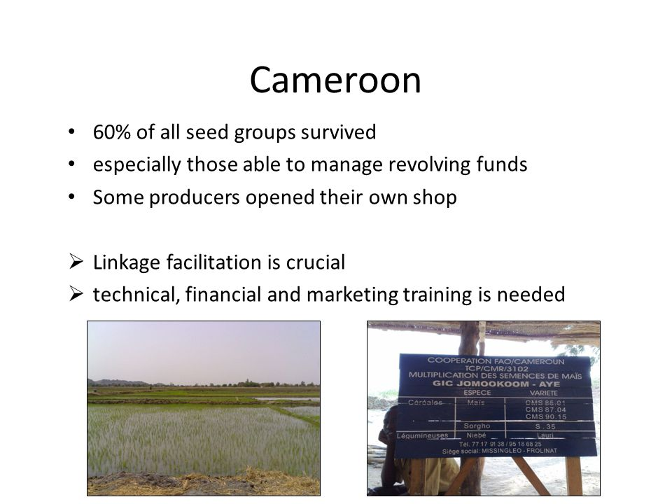 Cameroon 60% of all seed groups survived