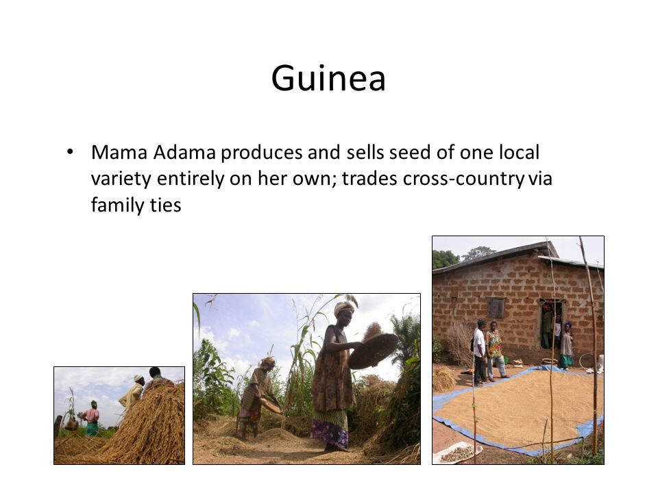 Guinea Mama Adama produces and sells seed of one local variety entirely on her own; trades cross-country via family ties.
