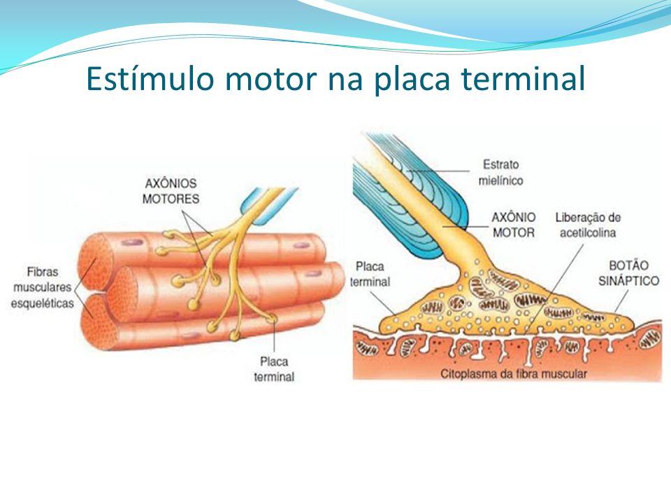 Estímulo motor na placa terminal