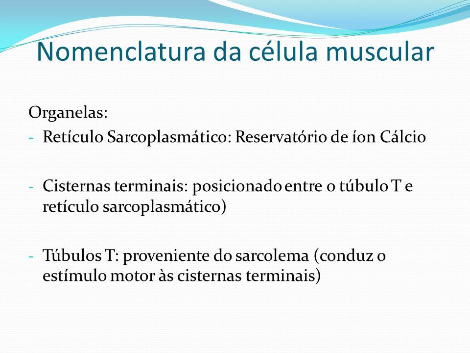 Nomenclatura da célula muscular