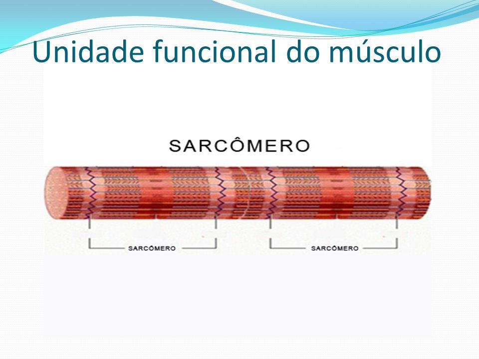 Unidade funcional do músculo