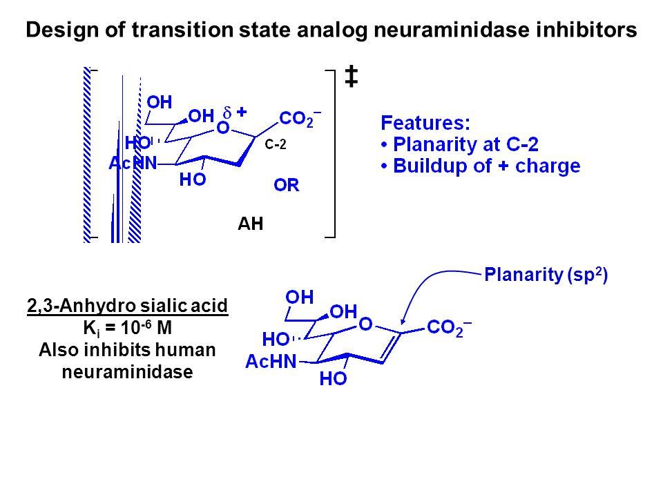 ‡ Design of transition state analog neuraminidase inhibitors