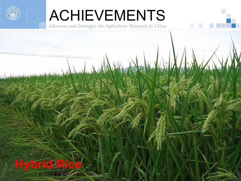 ACHIEVEMENTS Hybrid Rice