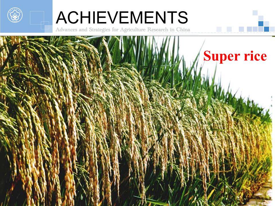 ACHIEVEMENTS Super rice