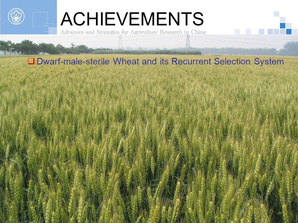ACHIEVEMENTS Dwarf-male-sterile Wheat and its Recurrent Selection System