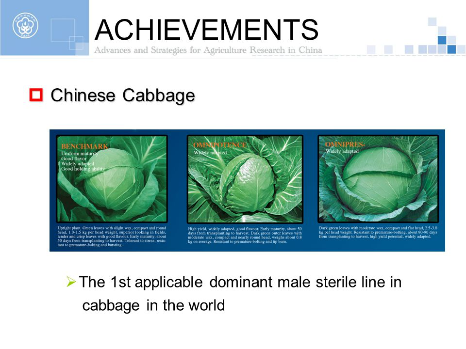 ACHIEVEMENTS Chinese Cabbage