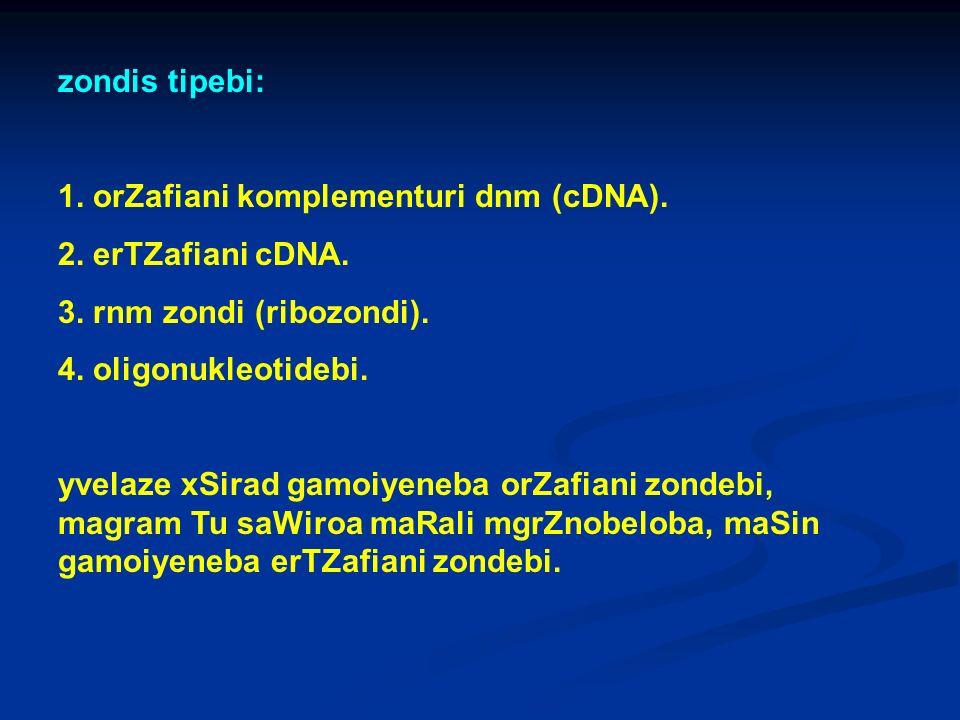 zondis tipebi: 1. orZafiani komplementuri dnm (cDNA). 2. erTZafiani cDNA. 3. rnm zondi (ribozondi).