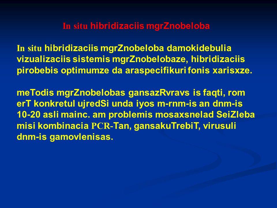 In situ hibridizaciis mgrZnobeloba