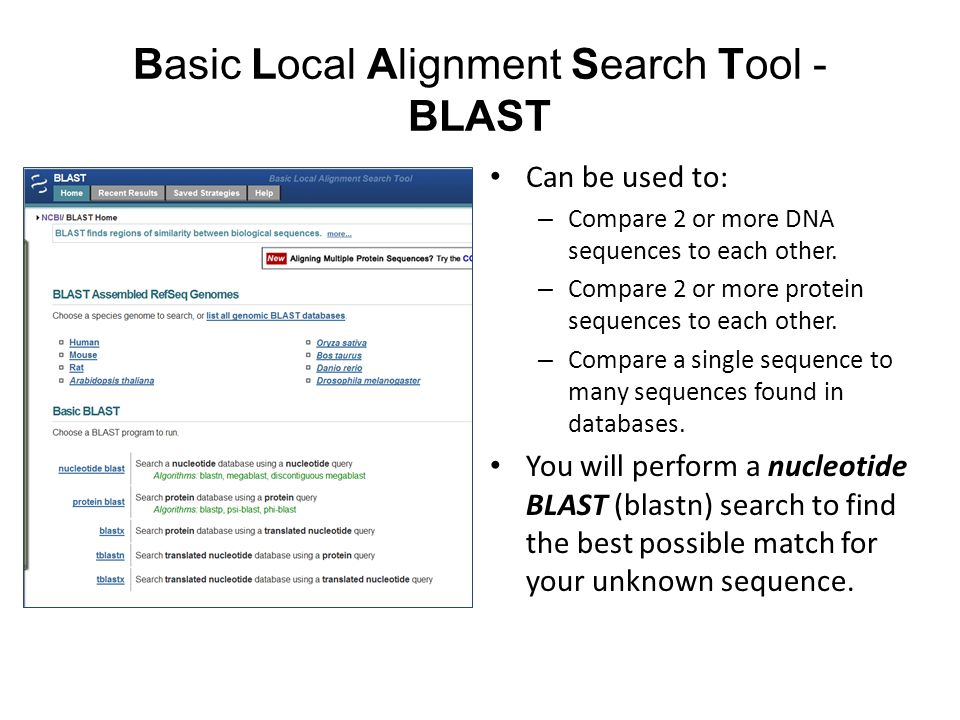 Basic Local Alignment Search Tool - BLAST