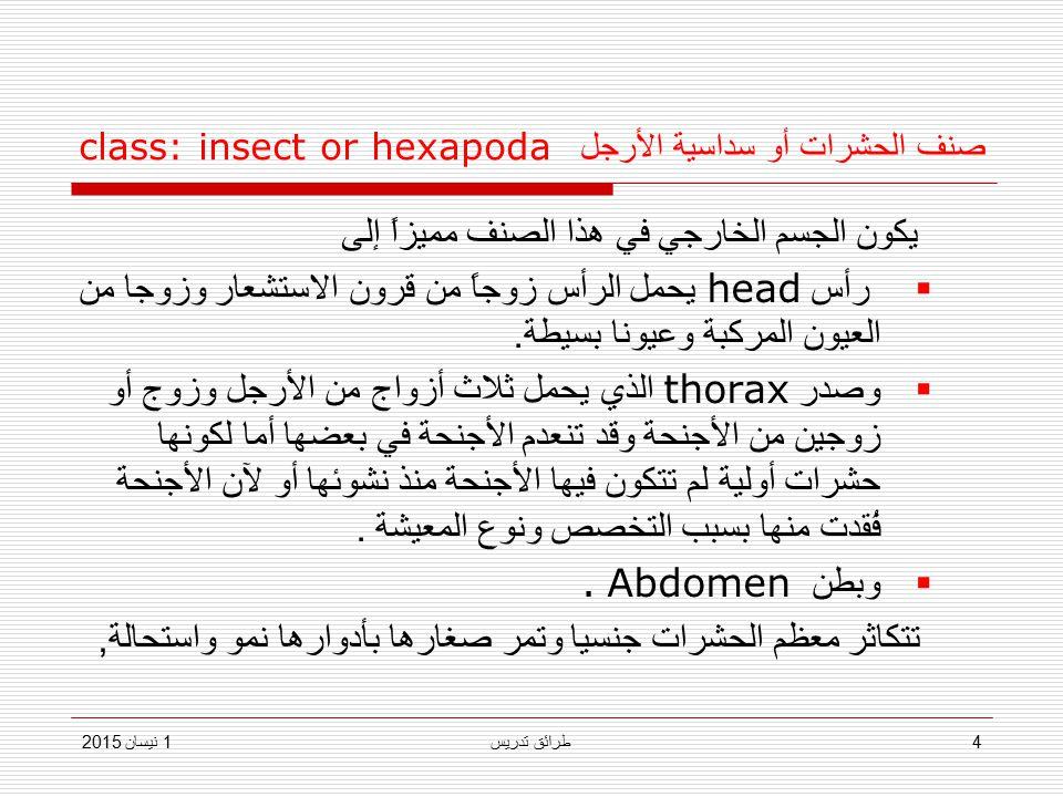صنف الحشرات أو سداسية الأرجل class: insect or hexapoda