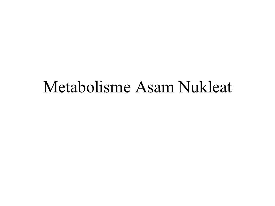 Metabolisme Asam Nukleat
