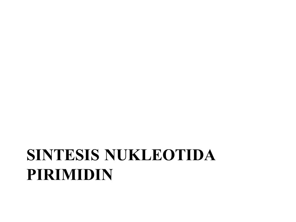 Sintesis Nukleotida pirimidin