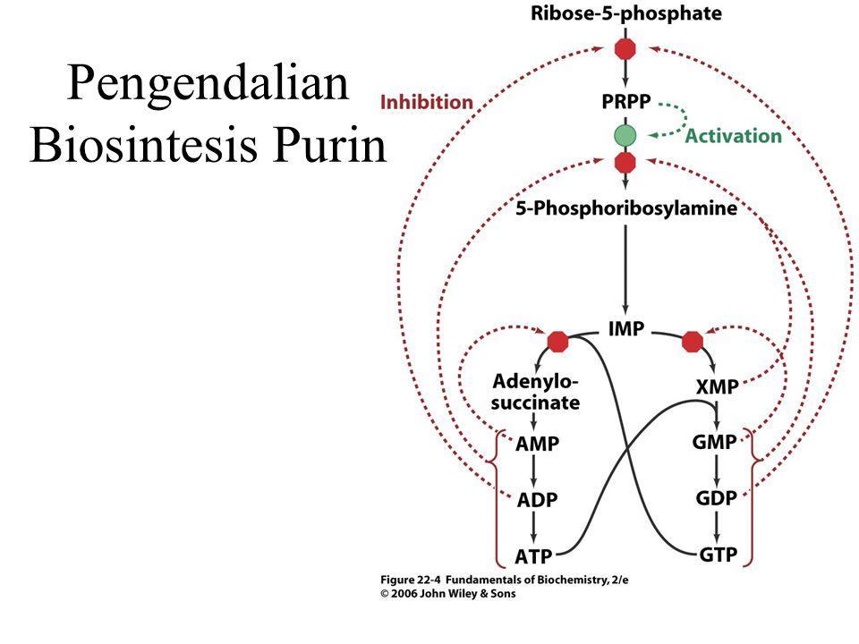 Pengendalian Biosintesis Purin