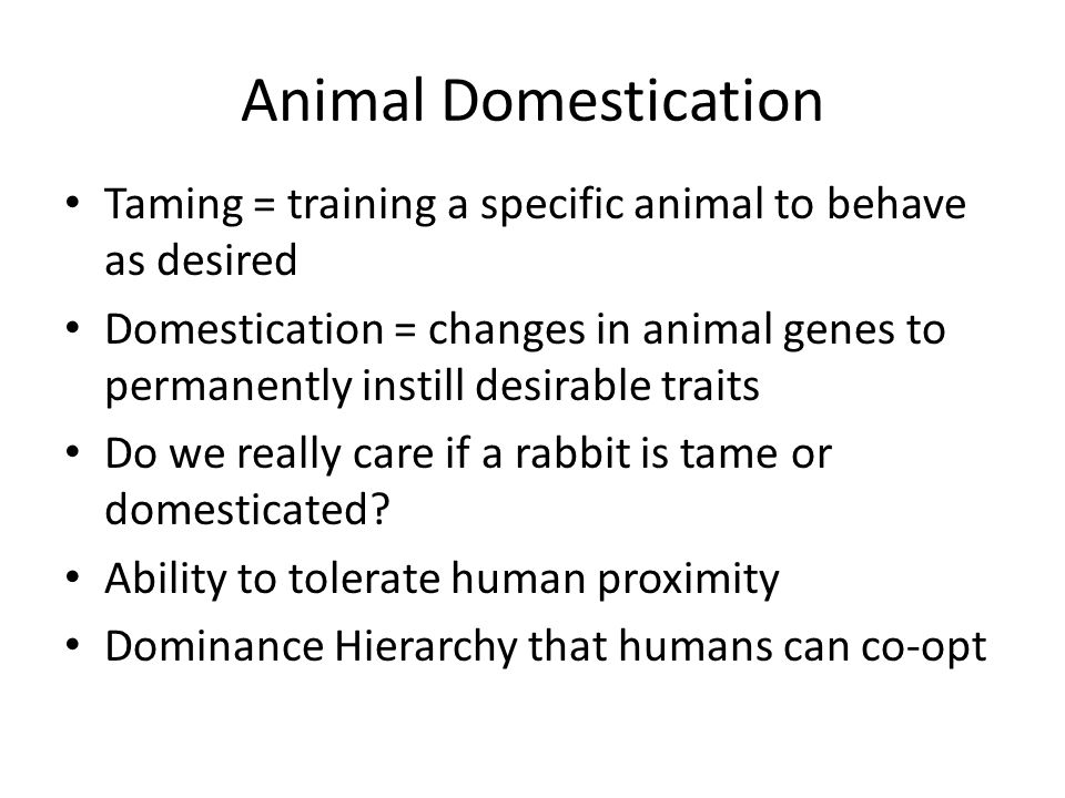 Animal Domestication Taming = training a specific animal to behave as desired.