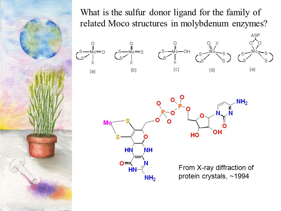 What is the sulfur donor ligand for the family of