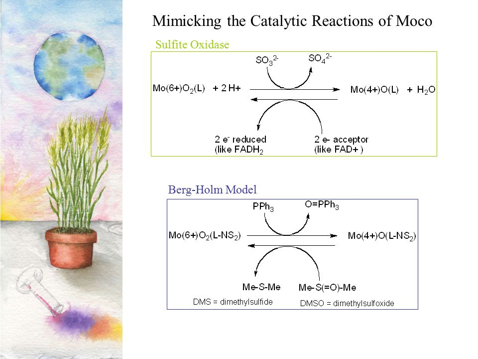 Mimicking the Catalytic Reactions of Moco