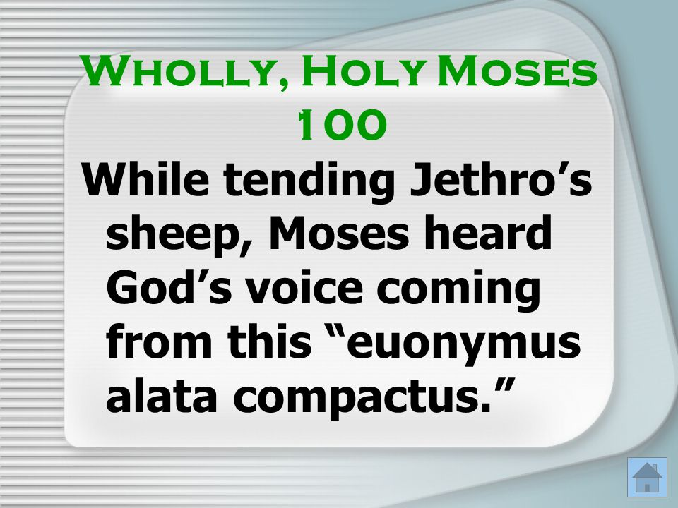 Wholly, Holy Moses 100 While tending Jethro's sheep, Moses heard God's voice coming from this euonymus alata compactus.