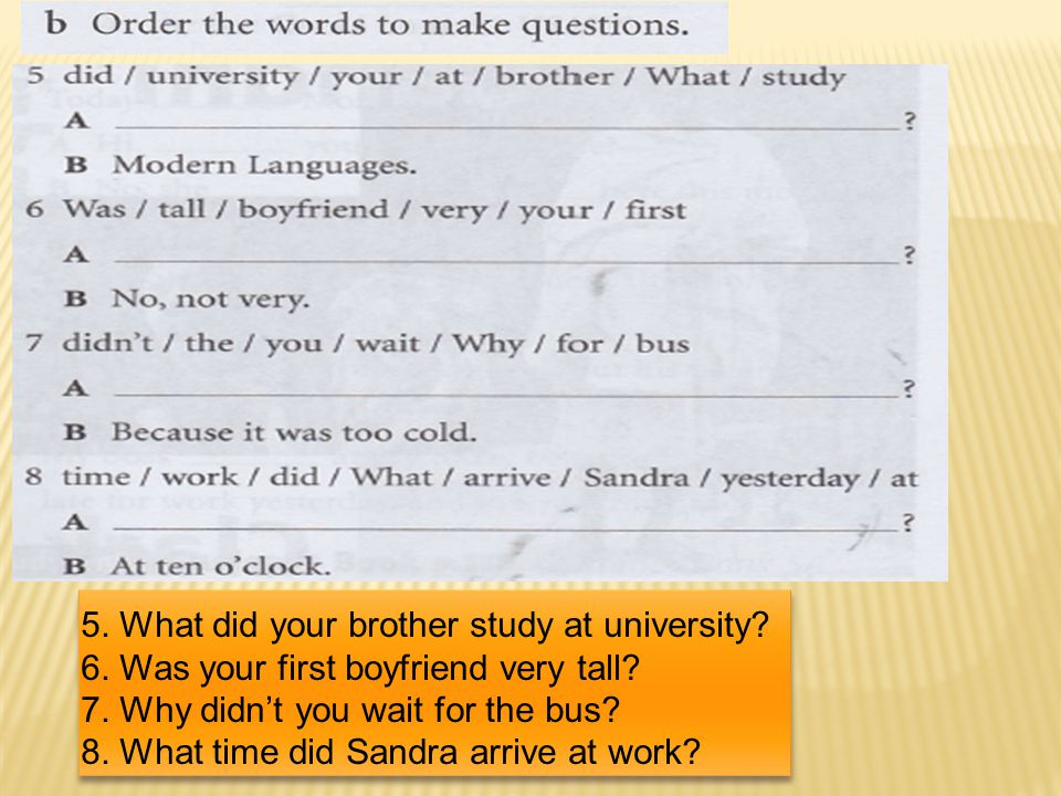 5. What did your brother study at university