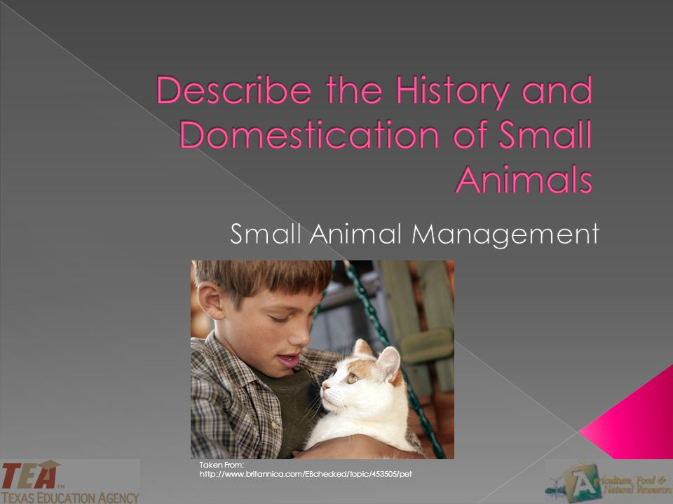 Describe the History and Domestication of Small Animals