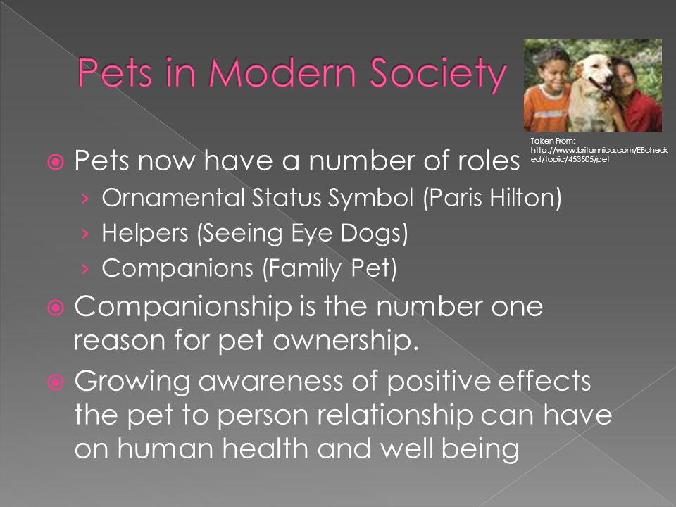 Pets in Modern Society Pets now have a number of roles