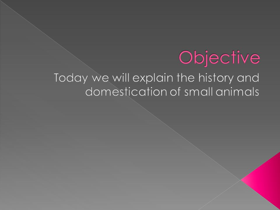 Today we will explain the history and domestication of small animals