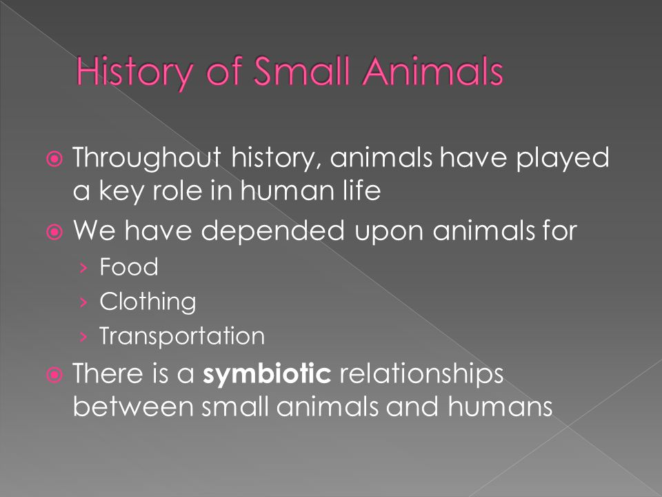 History of Small Animals