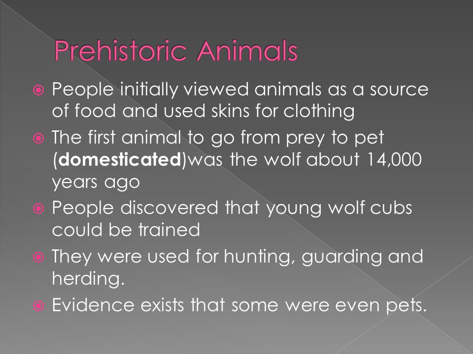 Prehistoric Animals People initially viewed animals as a source of food and used skins for clothing.