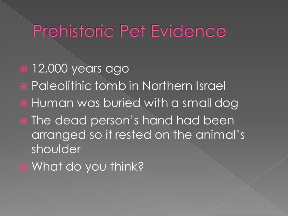 Prehistoric Pet Evidence