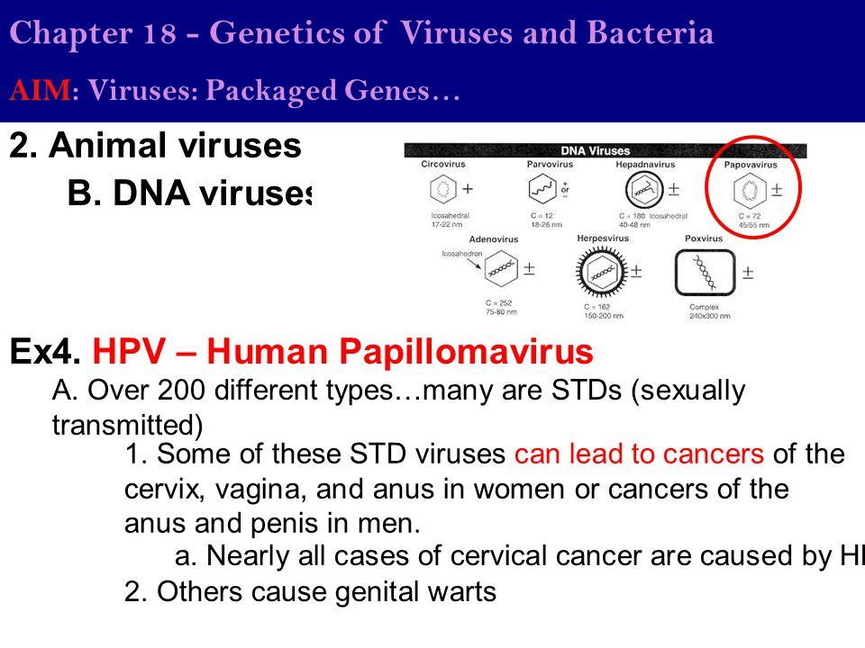Ex4. HPV – Human Papillomavirus