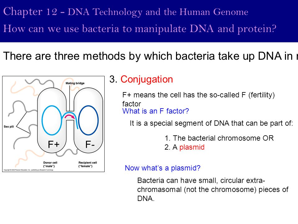 Chapter 12 - DNA Technology and the Human Genome