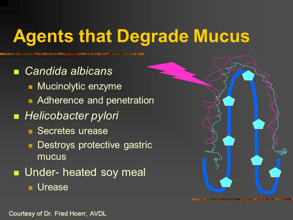 Agents that Degrade Mucus